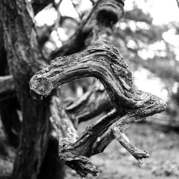 Öland, Trollskogen