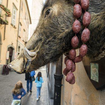 Wildschweine sind in Orvieto allgegenwärtig