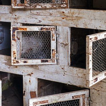 »...durch das Gartentor und in die Kaninchenställe, wo sie Sechsundsechzig spielten um Tabak und Rattenfelle...«