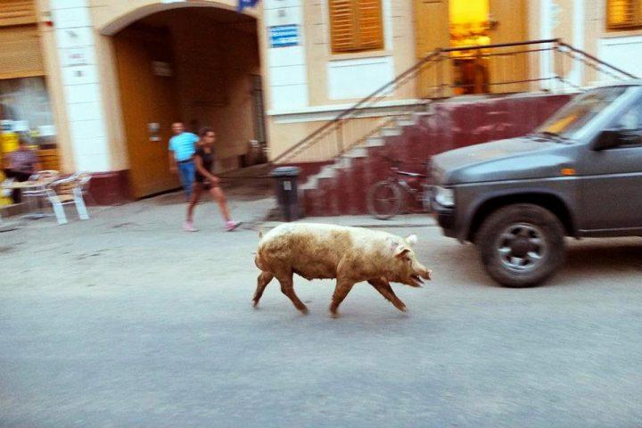 Es wird nicht jeden Tag eine andere, aber immerhin manchmal wenigstens eine Sau durchs Dorf getrieben...