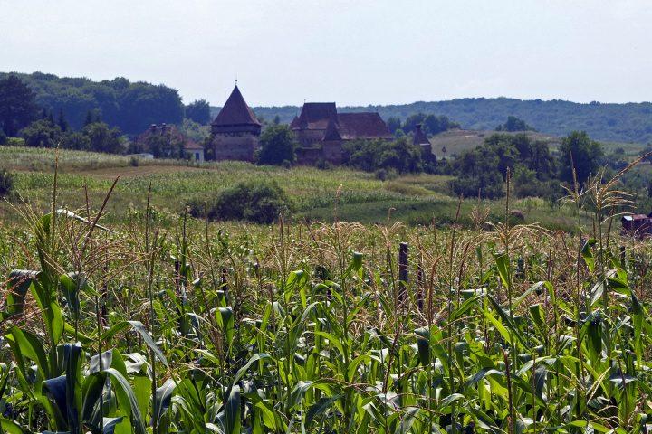 Die Burg in Almen / Alma Vii war im Sommer 2012 nicht zu besichtigen. Wegen eines politischen Streits sei der Schlüssel nicht mehr da.
