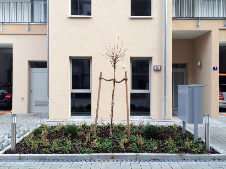 Fürth, Hinterhof, Jakobinenstraße, vermutlich eine sog. Ersatzpflanzung