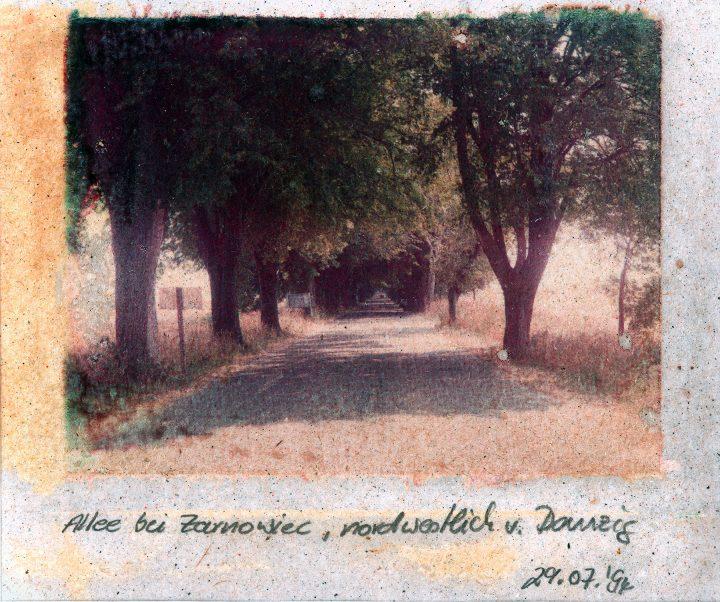 Allee bei Zarnowiec, Polen, 1994, Polaroidtransfer