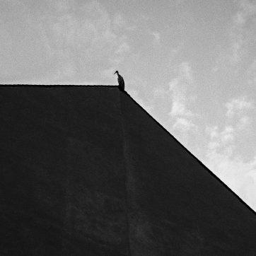 Storch auf Brandschutzmauer