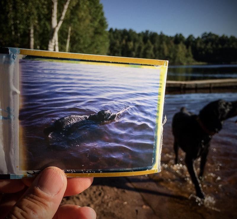 Hund schwimmt, bei Skoghult