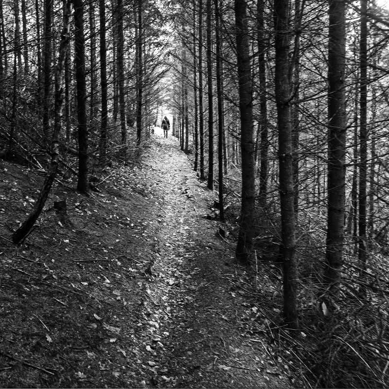 Wald am Ufer der Lainsitz