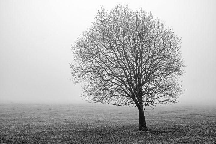 Bildaufteilung, Kombination von Linien und Flächen - vielleicht nicht perfekt, aber allemal besser als Baum oder Horizontlinie in der Bildmitte...