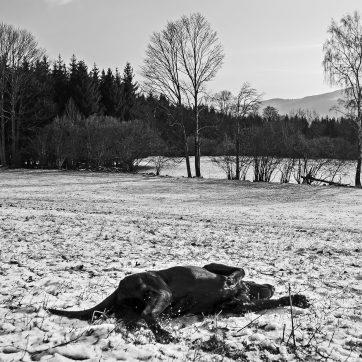 Boden, Hunde-Wellness