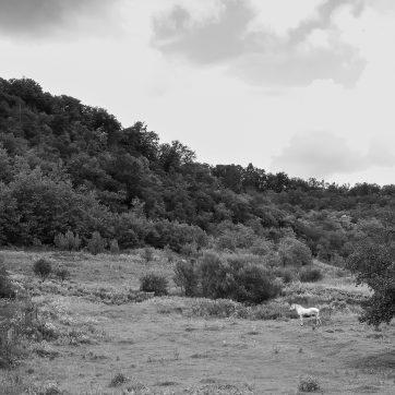 Hügel mit Schimmel