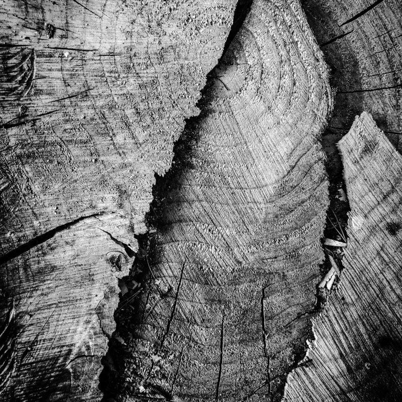 Holz (eigentlich schon von vor zwei Jahren)