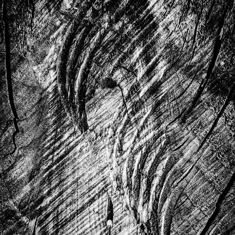Holz (Fotogramm)