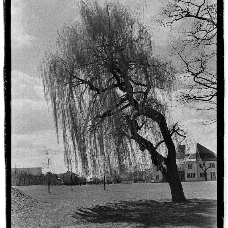 Weide, Fürth, Südstadtpark