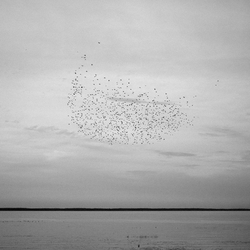Vögel über dem Haff