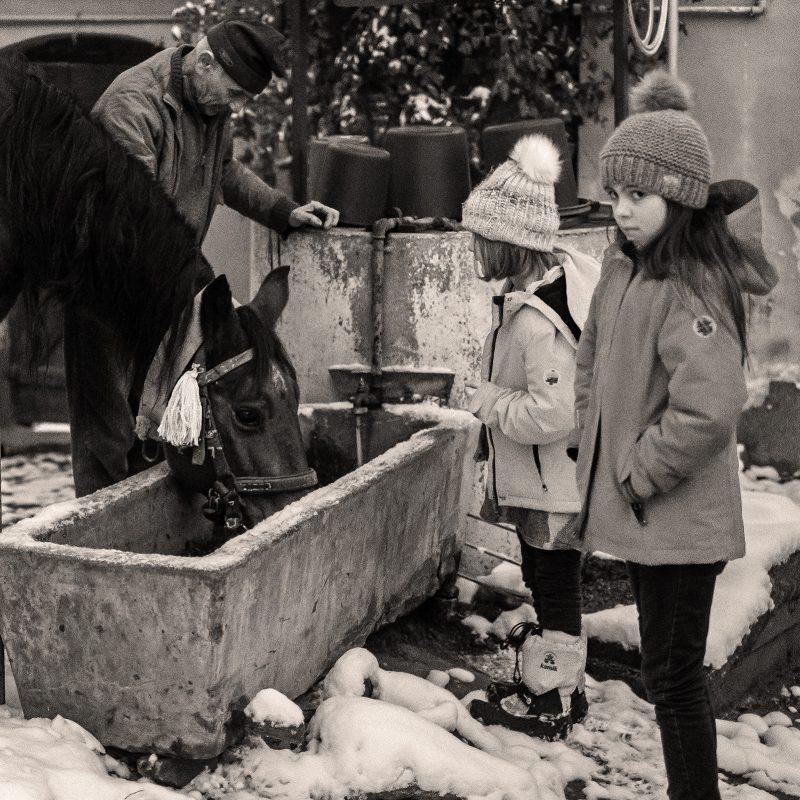 calul bea apă - fotograful învaţă românește