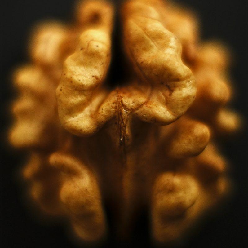 Gehirnnahrung