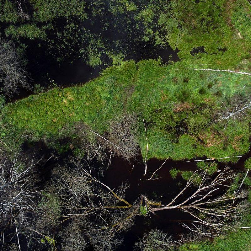 Moorgebiet vor der Talsperre Lučina - früher lag hier die Ortschaft Sorghof (Lučina)