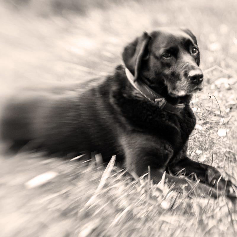 Hunde-Oma