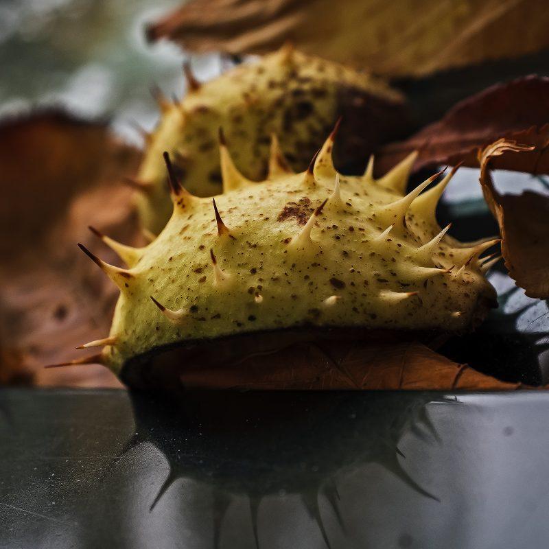 Virenhülle im Herbst