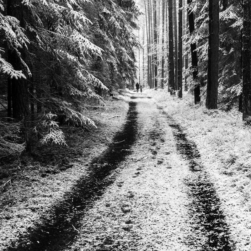 Wald zwischen Großhabersdorf und Fernabrünst
