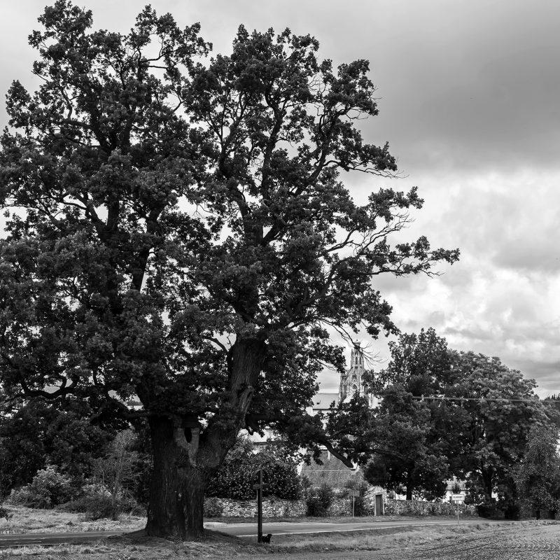 Kladruby Eiche, auch Baum des Lebens (Strom Života)